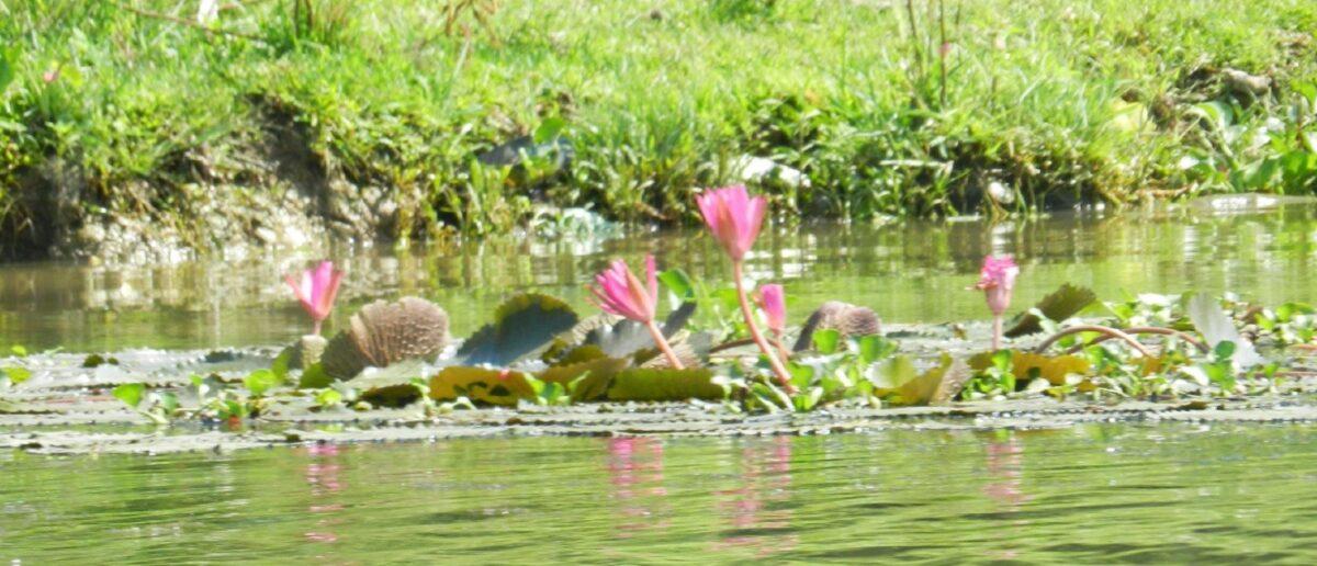 Vietnam – Le mille sfumature di verde e il fiore dell'alba rosa